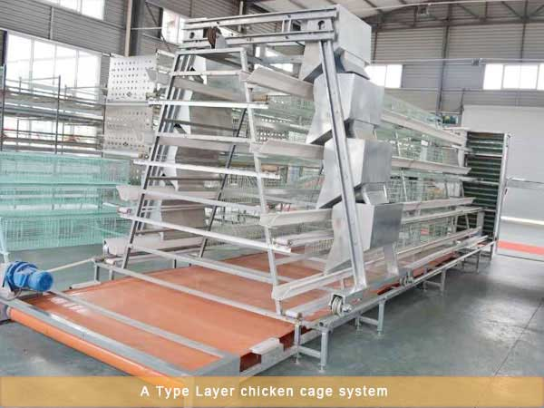 A type Layer chicken cage system