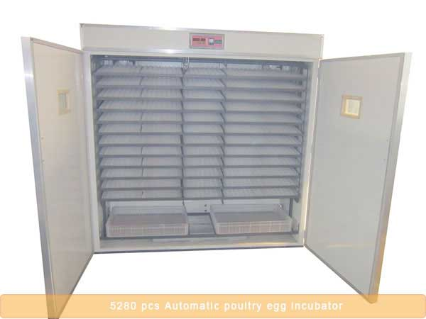 5280 pcs automatic poultry egg incubator