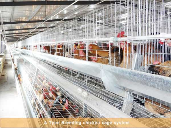Breeding chicken cage system