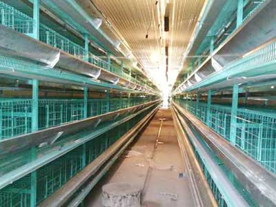 10,000 Layers Cage System Projects In Kazakhstan