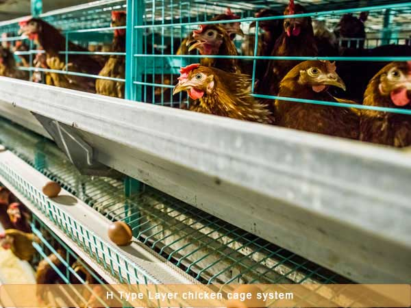 H type Layer chicken cage system