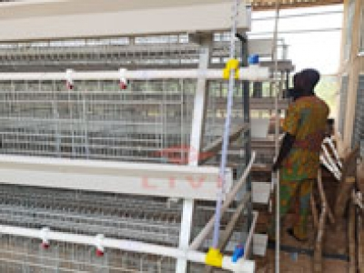 A Type Layer Cage System Sent Out Successfully In Nigeria